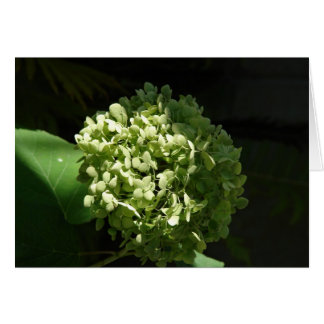 Hydrandgea Flower Card