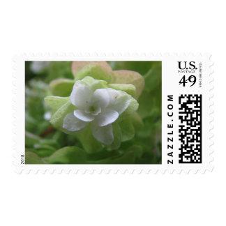 hydrangea3 postage stamps