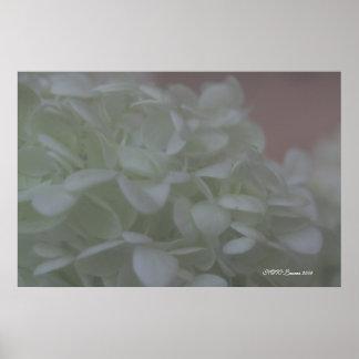 Hydrangea 6 poster