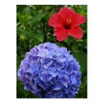 Hydrangea and Hibiscus Postcard