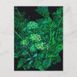 Hydrangea and Horseradish Floral Art Black & Green Holiday Postcard