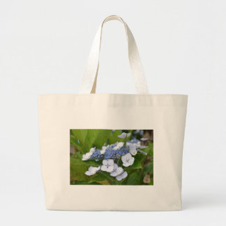 Hydrangea azul bolsas