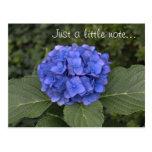Hydrangea azul bonito apenas una pequeña nota