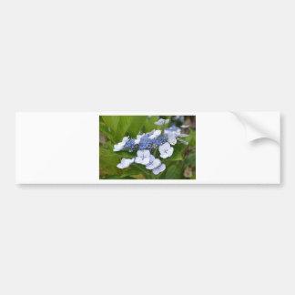 Hydrangea azul pegatina de parachoque