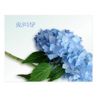 Hydrangea azul del cielo que casa la postal de