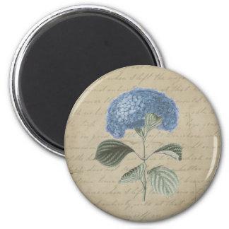Hydrangea azul del vintage con caligrafía antigua imán
