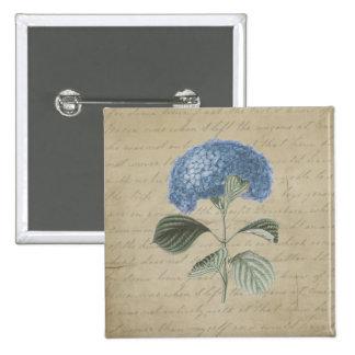 Hydrangea azul del vintage con caligrafía antigua pins