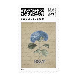 Hydrangea azul del vintage con caligrafía antigua sello