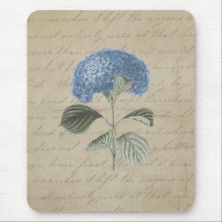 Hydrangea azul del vintage con caligrafía antigua tapete de ratones