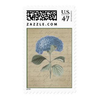 Hydrangea azul del vintage en caligrafía antigua timbre postal