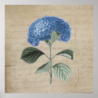 Hydrangea azul del vintage en el papel viejo póster