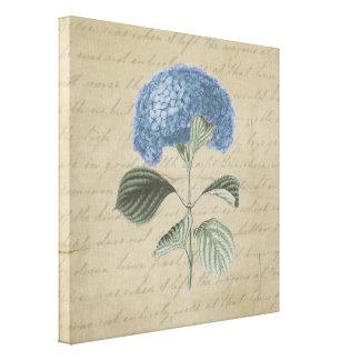 Hydrangea azul en caligrafía del vintage impresiones en lona