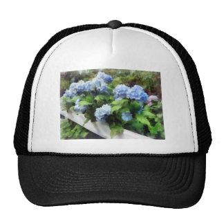 Hydrangea azul en la cerca blanca gorras de camionero