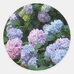 Hydrangea azul etiqueta