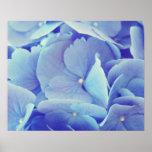 Hydrangea azul impresiones