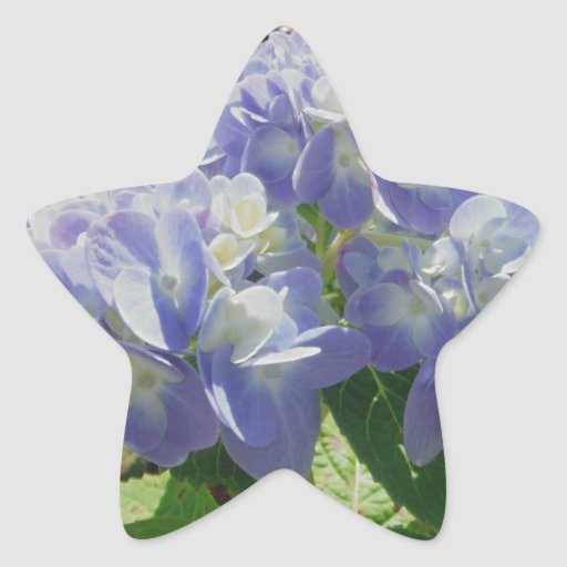 Hydrangea azul púrpura pegatina
