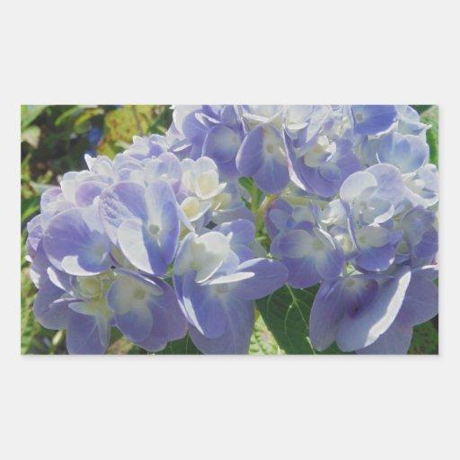 Hydrangea azul púrpura pegatina rectangular