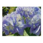 Hydrangea azul púrpura postal