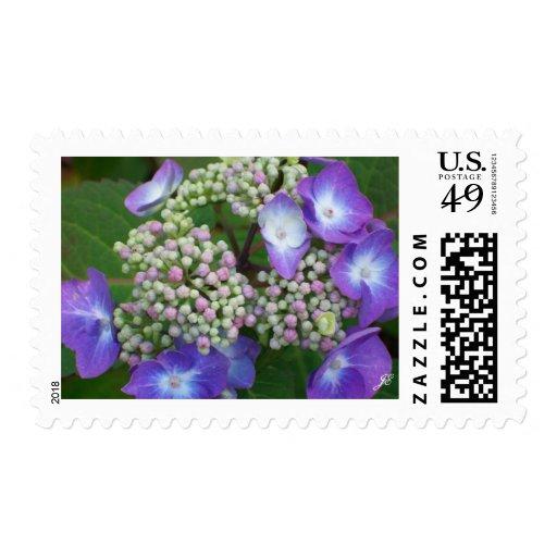 Hydrangea azul sellos