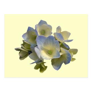 Hydrangea azul tarjeta postal