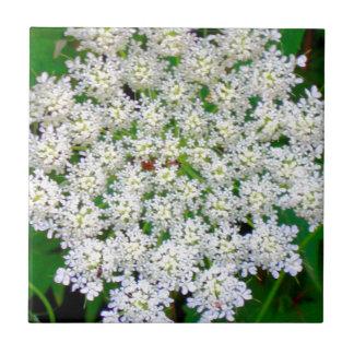 Hydrangea blanco del cordón azulejo cuadrado pequeño