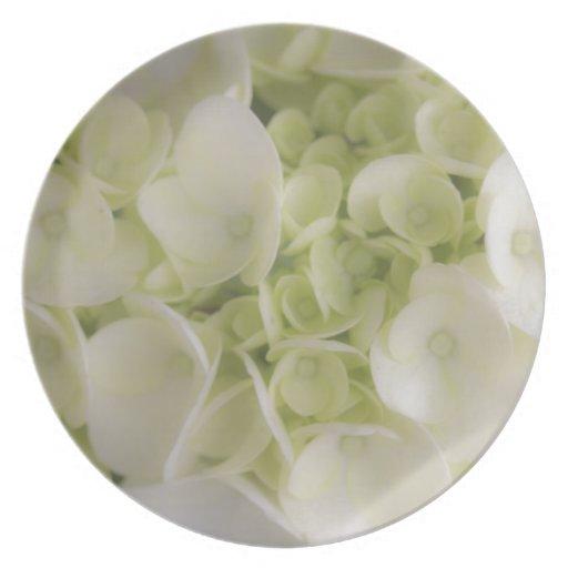 Hydrangea blanco platos de comidas