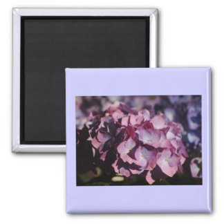 Hydrangea Blooms 2 Inch Square Magnet