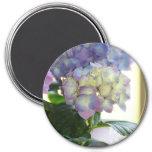 Hydrangea Blooms 3 Inch Round Magnet