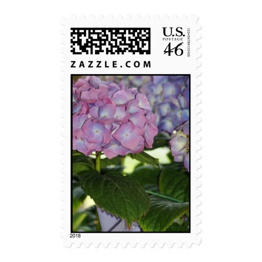 Hydrangea Blooms Postage Stamps