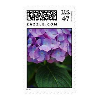 Hydrangea Blooms Postage