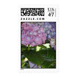 Hydrangea Blooms Postage Stamp