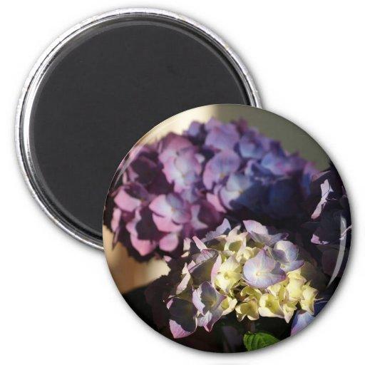 Hydrangea Blooms Refrigerator Magnets
