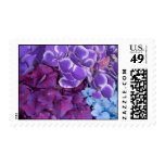Hydrangea Blossoms Postage Stamps