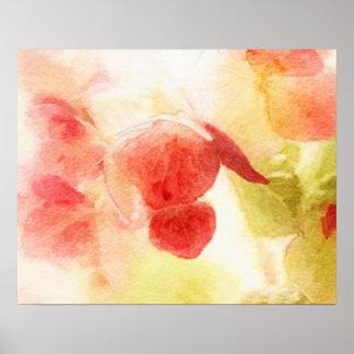 Hydrangea Blossoms Poster