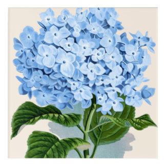 Hydrangea Blue Flower Acrylic Wall Art