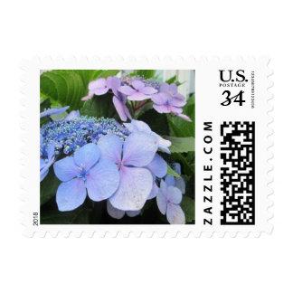 Hydrangea Blue Purple Pretty Flower Postage