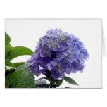 Hydrangea Bush Greeting Card