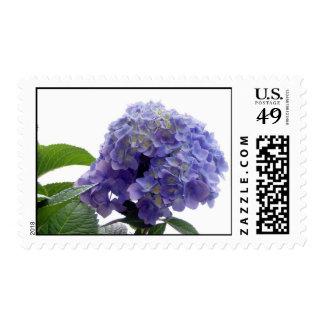 Hydrangea Bush Postage Stamp