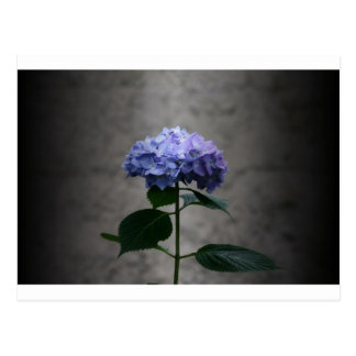 """hydrangea"" by Coressel Productions Postcard"