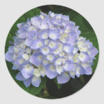Hydrangea Classic Round Sticker