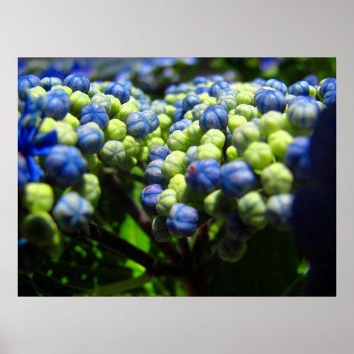 Hydrangea Close Up Image Print