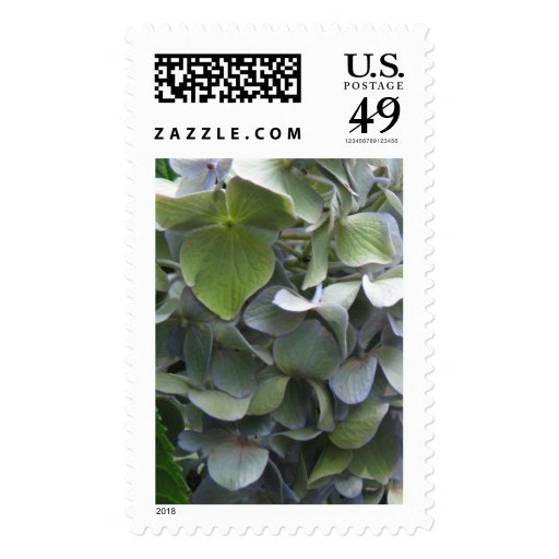 hydrangea close up stamps
