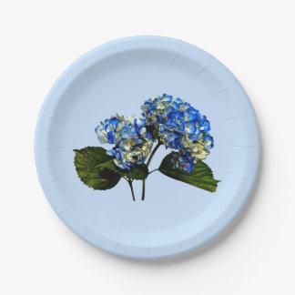 Hydrangea de dos azules con las hojas platos de papel