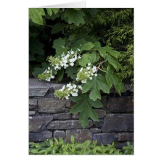 Hydrangea de la hoja del roble y una pared de pied felicitación