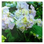 Hydrangea de la lavanda en jardín azulejo