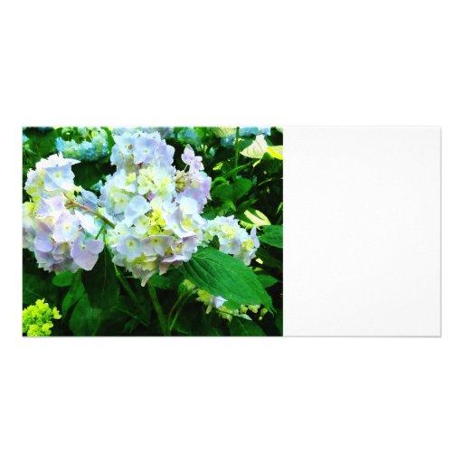 Hydrangea de la lavanda en jardín tarjetas fotograficas personalizadas
