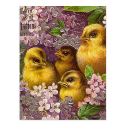 Hydrangea de la púrpura del polluelo de Pascua Postal
