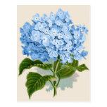 Hydrangea del azul del vintage postal