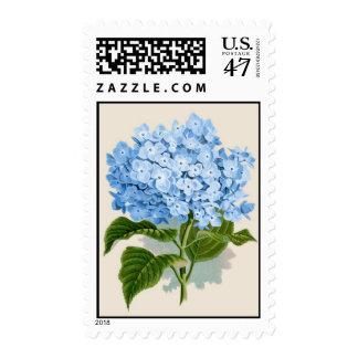 Hydrangea del azul del vintage sello postal