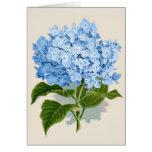 Hydrangea del azul del vintage tarjeton